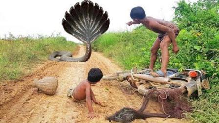 两兄弟从郊外骑摩托车捕鱼回家, 半路杀出二条蟒蛇, 结果悲剧了