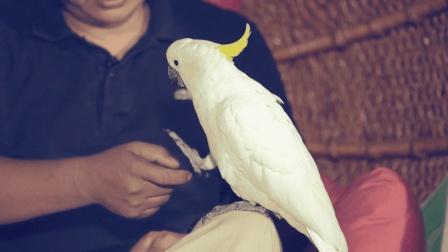 中国最霸道的母鹦鹉, 把驯养员当老公, 攻击所有女性生物
