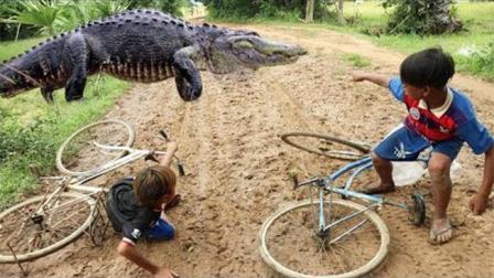 刚出壳的鳄鱼遇见柬埔寨的放牛娃, 结果比蟒蛇还悲剧, 心疼啊!