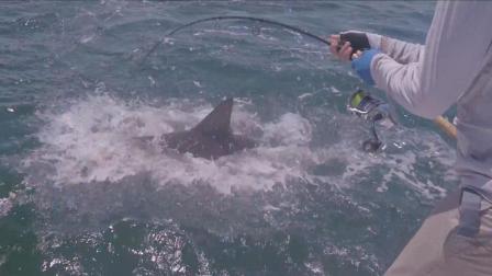 超强船钓 逗钓鲨鱼巨型石斑