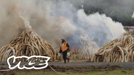 VICE报道 | 擅闯者格杀勿论:肯尼亚极端野生动物保护组织