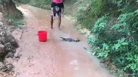 哇! 这什么原理, 这种地方也有鳄鱼抓?
