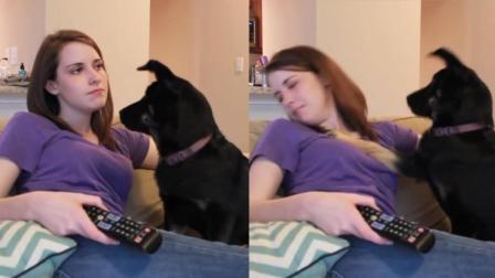 美女 有些动物你惹不起啊 动物调戏美女搞笑视频