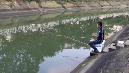 """无聊到城中灌溉渠钓鱼, 遭遇猛""""打脸""""!"""