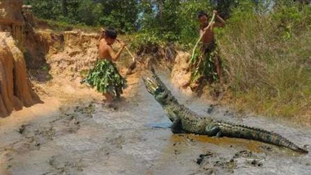 两个农村孩子野外打鱼, 不小心闯入鳄鱼的巢穴, 吓得不轻啊!