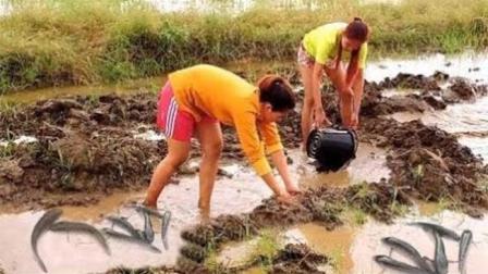 刚犁过的水田黑鱼泛滥成群, 农村两姑娘舀舀水, 抓都抓不完