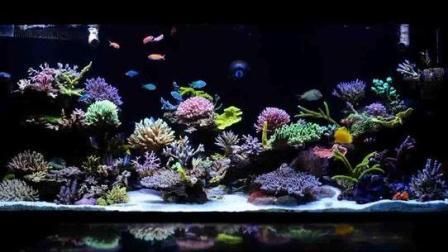 海水缸最咸鱼级入门, 简单介绍怎么培养海水