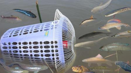 柬埔寨的美女最擅长用这种陷阱捕鱼, 见效快, 关键鱼抓得多!