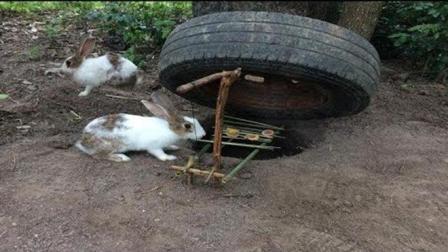 男孩小树林里设计了个陷阱抓野兔, 仅3小时竟收获一只兔子!