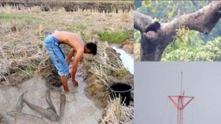 农村的水田肥鱼多, 男人干完农活直接下田抓, 一次抓七八条就收工