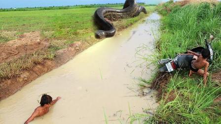 两兄弟河边捕鱼时见对岸窜出一条大蟒蛇, 哥俩往前一扑, 悲剧啊!