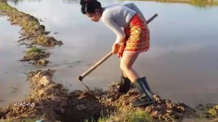 实拍: 农村小伙带女朋友下田挖坑捕鱼, 2小时黄鳝竟排着队往里钻