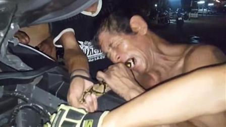 巨蟒缠车3小时不放 柬埔寨古法捉尾猛咬一招抽出