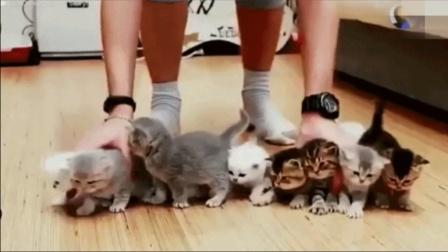 【别挤,大家排好队!】萌宠搞笑视频 人与动物搞笑视频 动物搞笑视频集锦