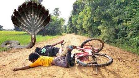 农村两娃骑自行车去外婆家, 突然路中央杀出一条毒蛇, 太可怕了