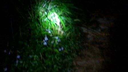 农村小伙半夜到野外捉蚂蚱, 只听到虫鸣和流水声