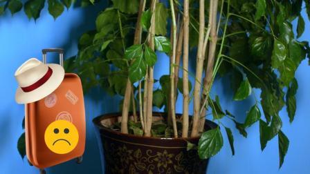 出远门后家里的植物怎么办? 这个办法非常管用