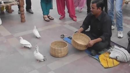 印度大哥表演的传统戏法! 就这样的手法也有人看, 观众都是好心人