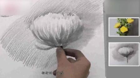 素描头像素描基础入门教程基础素描静物写生菊花3超写实素描