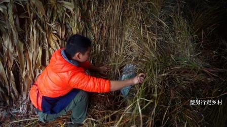 农村小哥在柴堆下面发现一包硬货, 打开一看, 开心坏了!