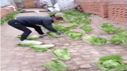 人民币玩家把白菜种在石板路上, 这回玩偷菜游戏方便多了