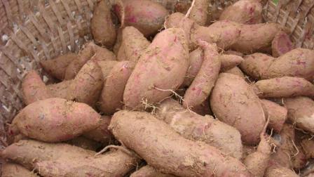红薯好吃还能降压, 可千万不能和这3种东西一起吃, 真的会影响健康