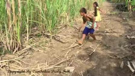 农村小朋友甘庶地里寻野, 去遇大蟒蛇在捕食, 然而小朋友却这样做