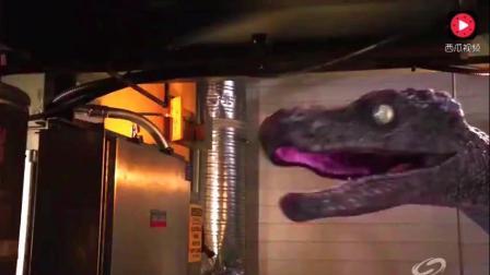 这么大巨蟒你们见过吗? 在恐龙时代也属于顶尖的吧