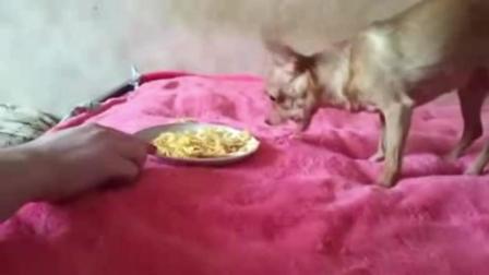 不管和狗狗关系多好, 不要吃饭的时惹它!