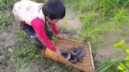 农村娃水稻里捞鱼, 结果1条鱼没捞到, 却捞到这2条大家伙