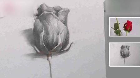 素描头像素描基础入门教程基础素描静物写生玫瑰1摄影素描