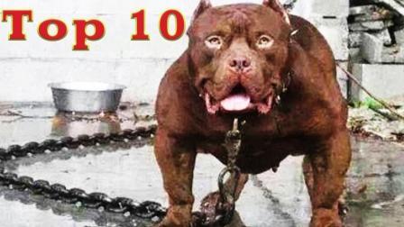 世界十大恶犬排行榜, 藏獒仅排名第五