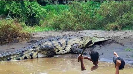 2男孩野外放鱼笼, 途中碰上1条大鳄鱼, 男孩选择这样做!