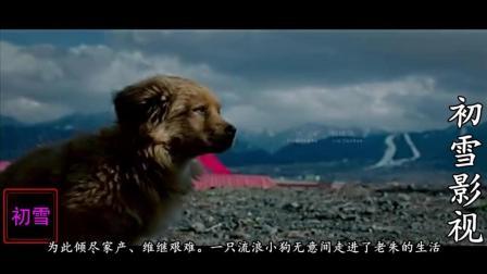 初雪影视之血狼犬, 中国西北天山林场的一段令人愁肠百结而又热血沸腾的西部往事
