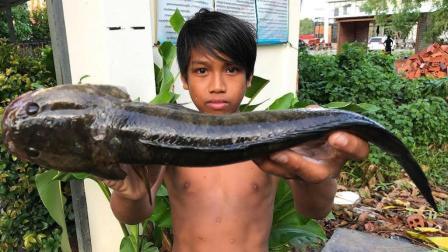 不要吃清蒸黑鱼了, 农村男孩这样做黑鱼真下饭, 刚上桌就被吃光了