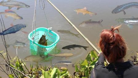 农村姑娘把篮子往水里一丢, 坐等鱼, 30分钟搞了不少的野货