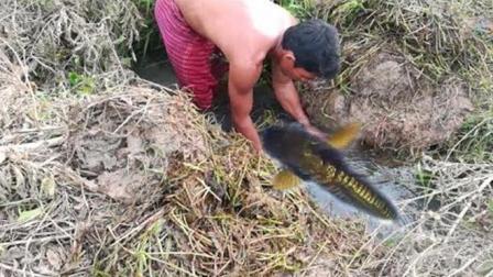 农村小哥在出水口处放了2个鱼笼, 第二天来收, 这收获太让人羡慕了
