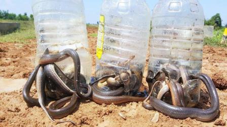 3个塑料瓶挂在灌木丛中, 1群水蛇竟着急往里钻, 把女孩乐坏了