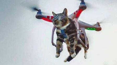 大疆精灵3硬绑小猫升空飞行 各种惊吓! 铲屎的, 你想干嘛?