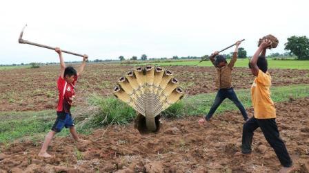 3个小孩野外挖蛇, 见洞就挖, 没想到洞里是2条大毒蛇, 结果悲剧了