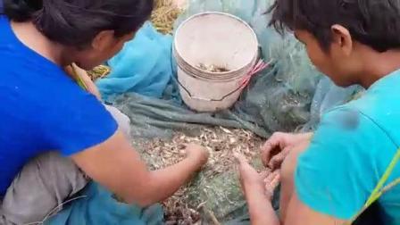男女搭配干活不累, 农村小夫妻在河里捕鱼, 收获太丰厚了