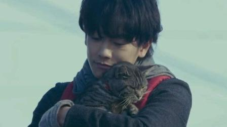 新片剧透《假如猫从世界上消失了》