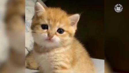 萌死人了, 2017可爱猫咪视频汇编