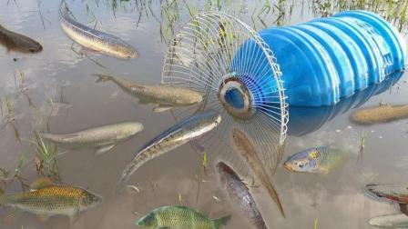 自制一个简单的捕鱼陷阱, 等鱼钻, 2小时竟抓了5斤塘角鱼
