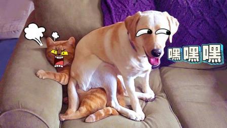 猫咪和二狗子的爱恨情仇