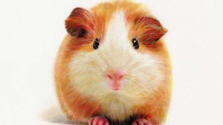 彩铅画教程 动物毛发 仓鼠 上