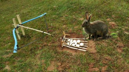 实拍: 高人设计吊脚套抓野兔全过程, 原来野兔也有抓狂的时候