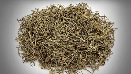 白花蛇舌草的功效与作用有哪些? 北京东方医院介绍白花蛇舌草!