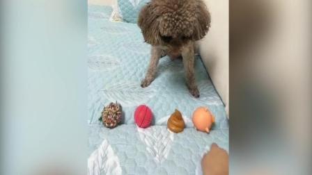 这个狗狗诠释了什么叫做真正的狗改不了吃屎!