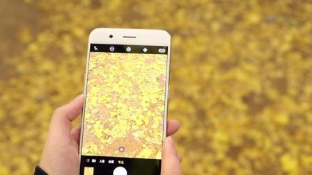 小白学摄影 用手机也能拍出好看的秋叶